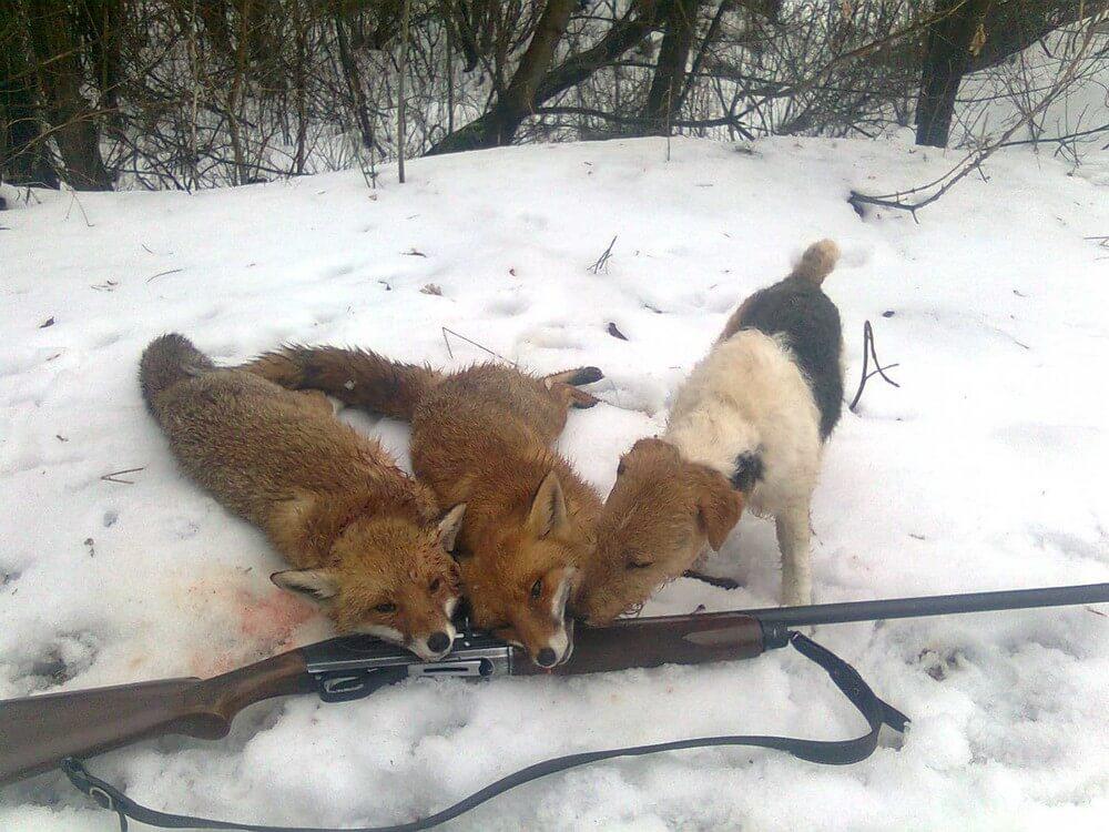 В Украине открывается сезон охоты на копытных животных и пушных зверей