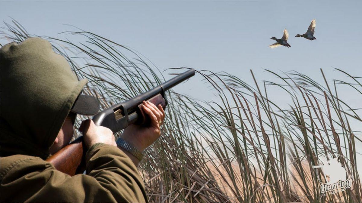 Как выбрать манок для охоты на утку, гуся и другую птицу?