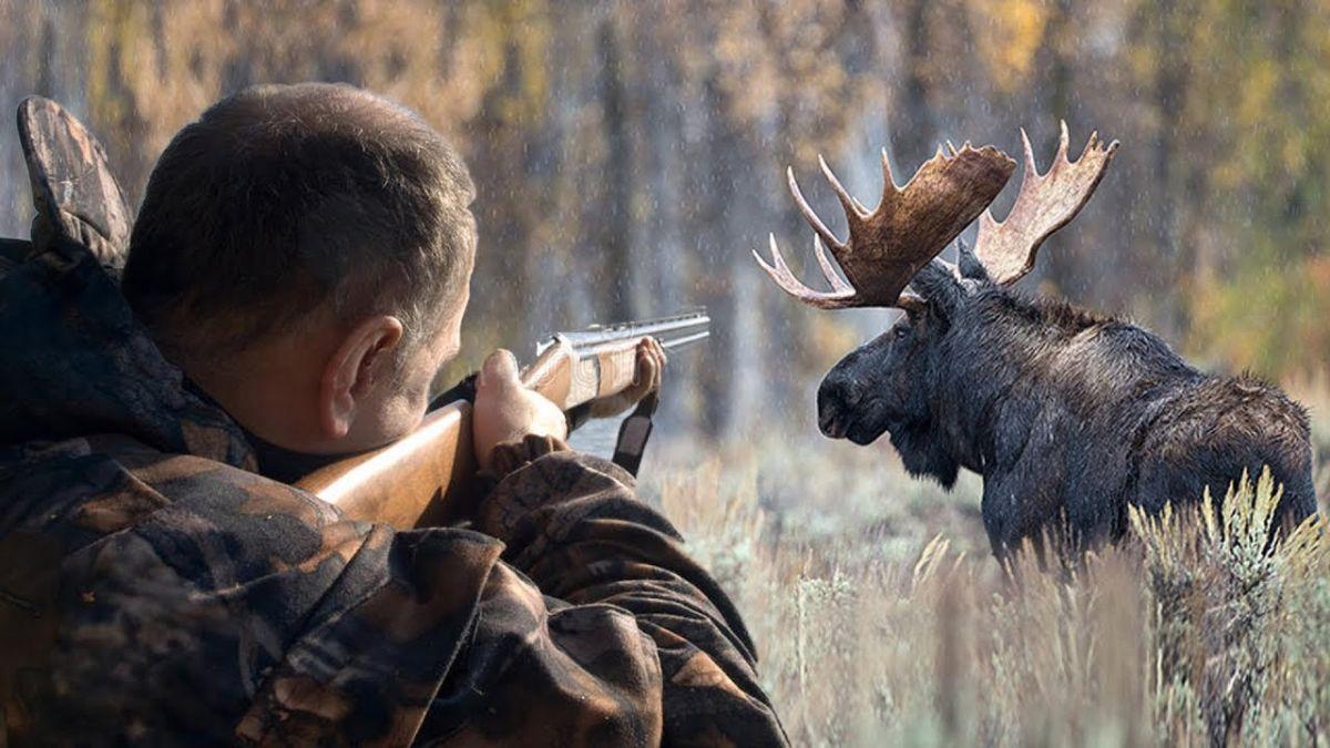 запрет охоты на лося в Украине